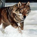 lupo-sulla-neve-1