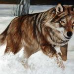 lupo-sulla-neve-particolare-1