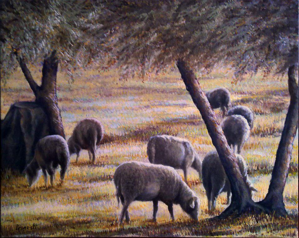 pecore-al-pascolo
