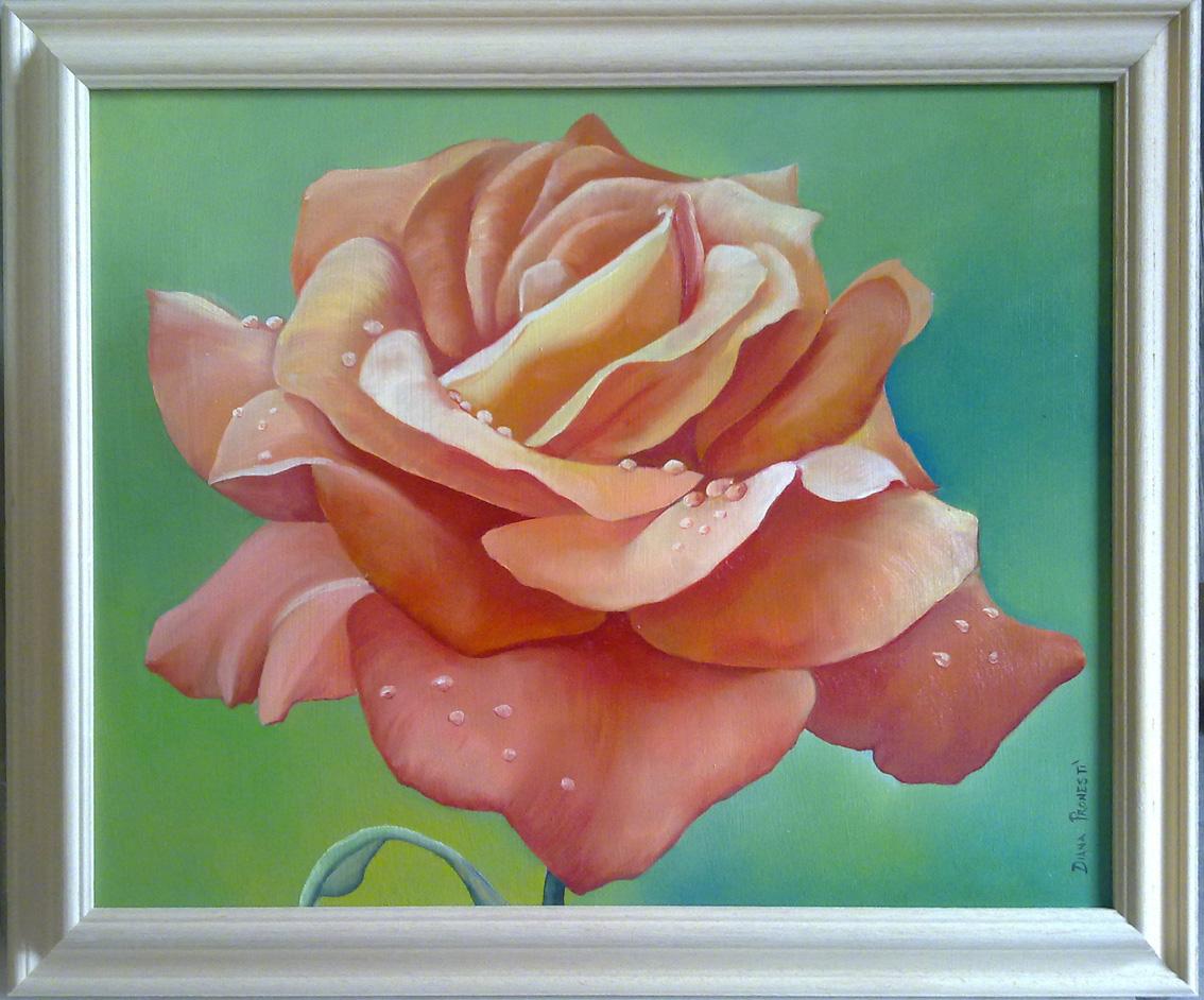 Rosa arancio dim. 40x50