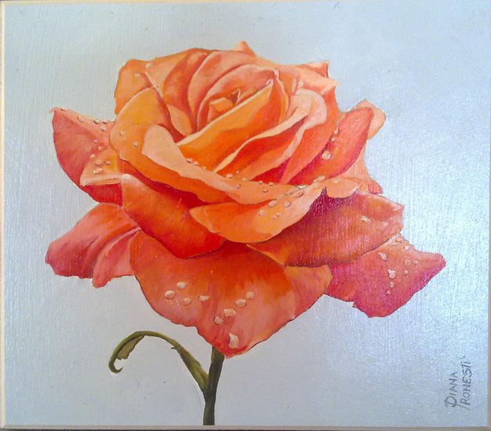 Rosa arancio con rugiada 21x24