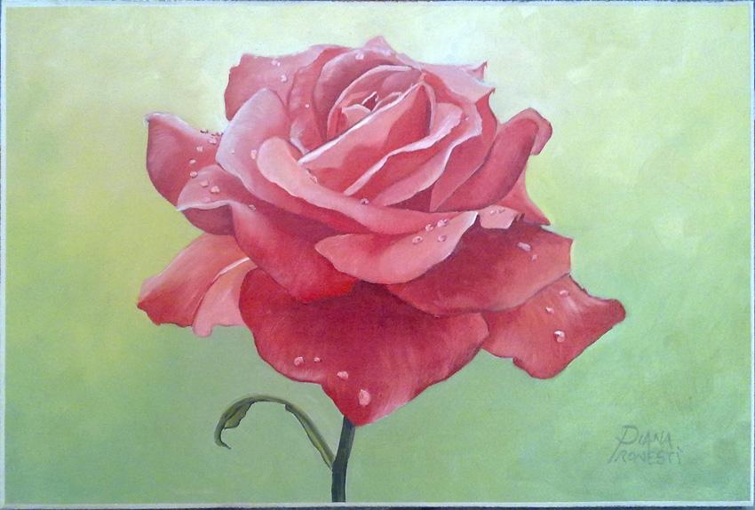 Rosa rossa con rugiada 20x30
