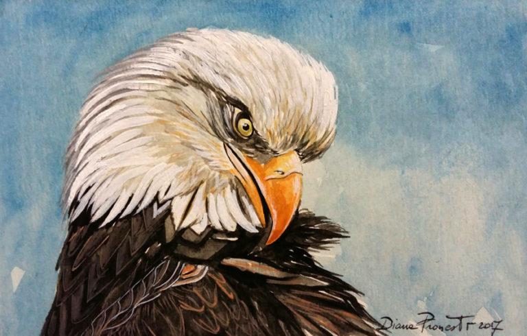 Aquila reale - acquerello