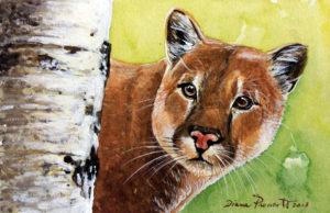 Puma - acquerello