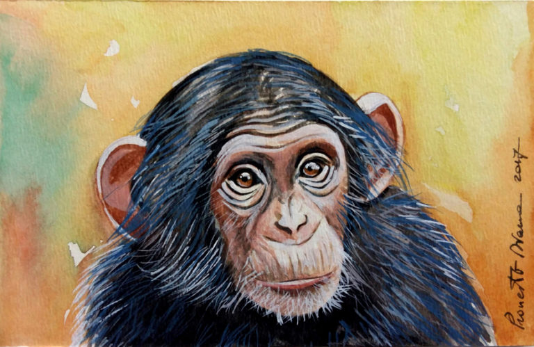 Scimpanzé - acquerello