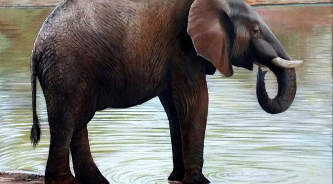 Elefante olio su tavola cm. 69 x 62