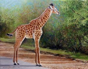 giraffa olio su tavola 56x71 cm