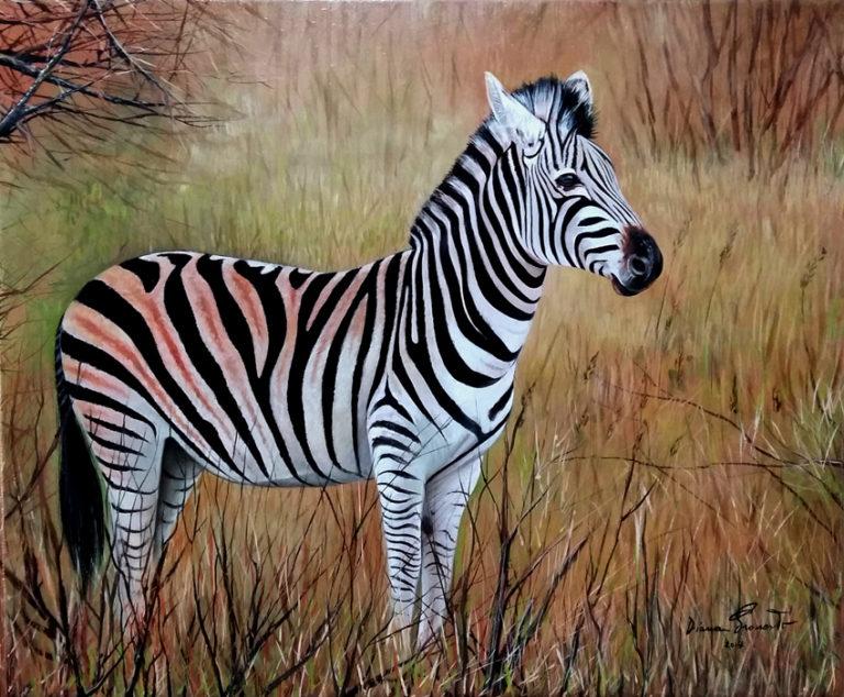 zebra olio su tavola 61x51 cm